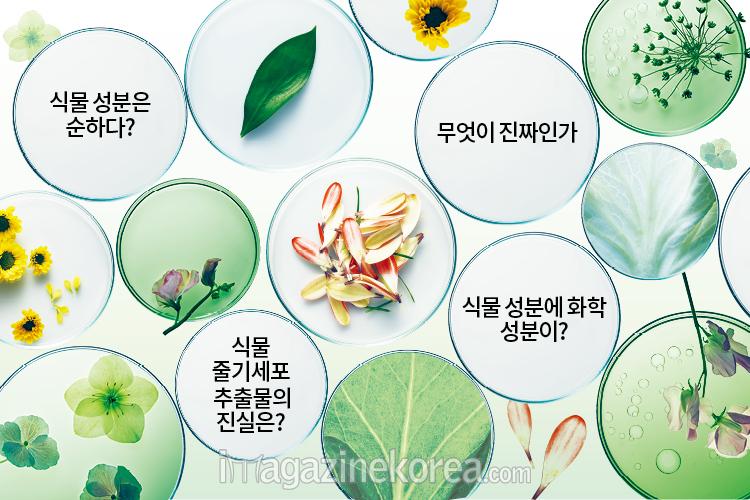 식물 대담