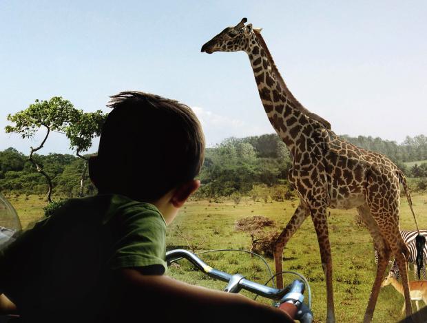 신비한 동물원